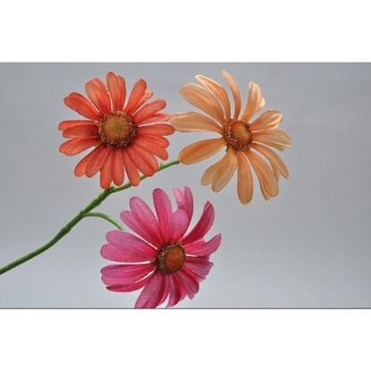 Kopretina růžová/oranžová 33 cm_0