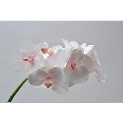 Orchidej Vanda sv.růžová 59 cm_0