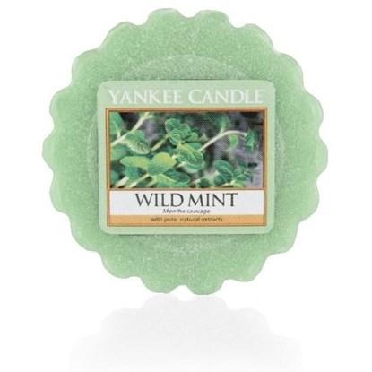 Vonný vosk Wild Mint_0