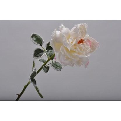 Růže na stonku krémová 65 cm_0