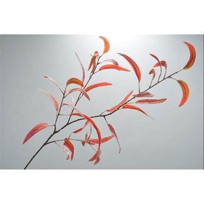 Větvička eukalyptu oranžovočervená 115 c_0
