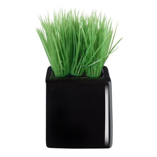 Travina malá v černém květináči_0