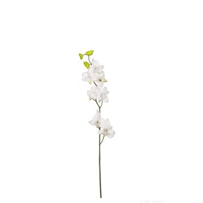 Orchidej 60 cm_0