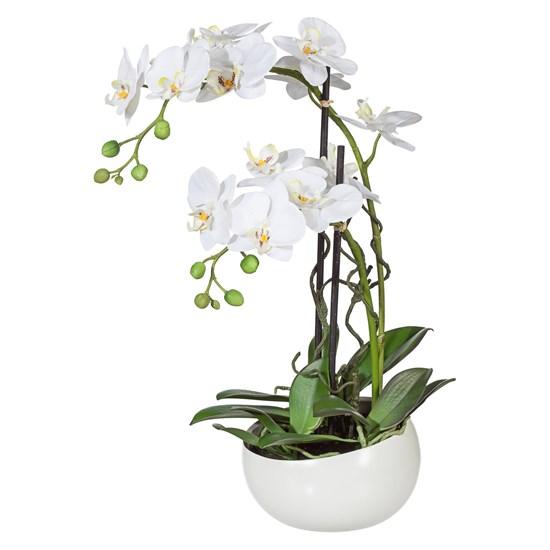 Orchidej Phalenopsis 55cm bílá_0