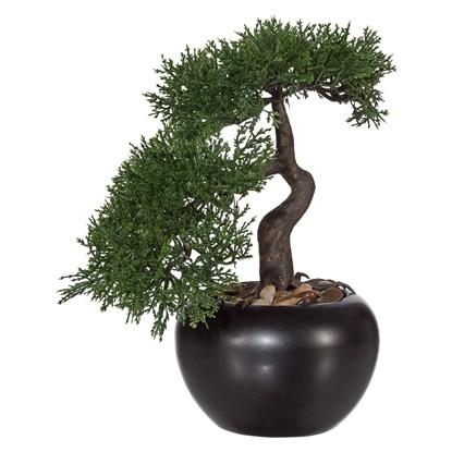 Bonsai ZEDER 25 cm (vč. květináče)_0