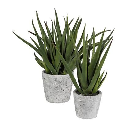 Aloe v květináči 40 cm (vč.květináče)_0