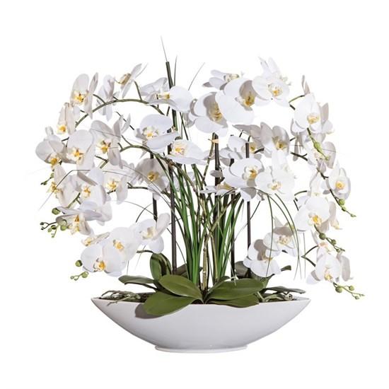 Phalaenopsis x8, ca 70cm (vč.keram.mísy)_0