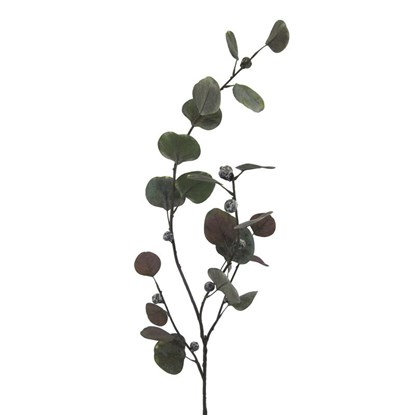 Větvička eukalyptu 4/celofán_0