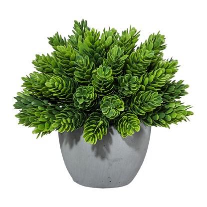 Rostlina 15 cm (vč.květináče)_0