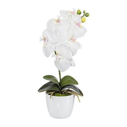 Orchidej Phalenopsis 40cm (vč.květináče)_0