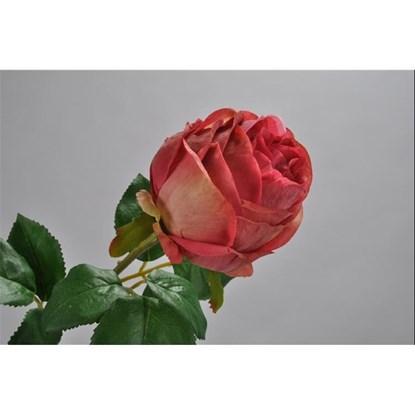 Růže 50 cm_0