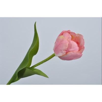 Tulipán růžová_0