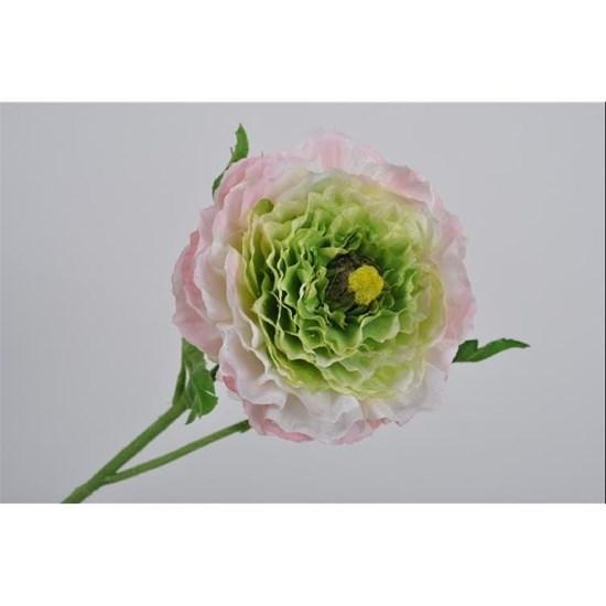 Pryskyřník růžová/zelená_0