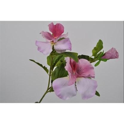 Fialky růžová_0