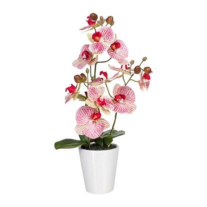 Orchidej 45 cm růžová (vč.květináče)_0