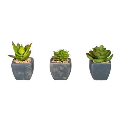 Sukulenty 4 druhy 8,5cm (cena za ks)_0