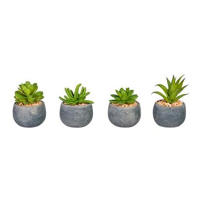 Sukulenty 4 druhy 8-10cm (cena za ks)_0