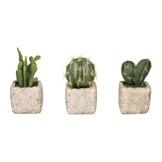Kaktusy 14 cm 3 druhy (cena za ks)_0