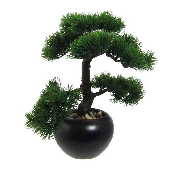 Bonsai KIEFER 37 cm (vč. květináče)_0