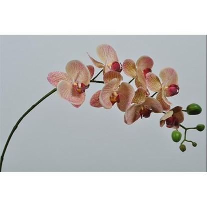 Orchidej 77 cm_0