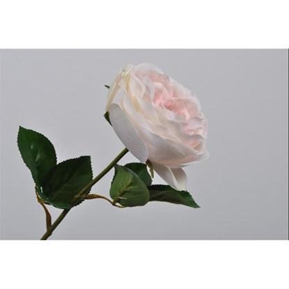 Růže 45 cm_0