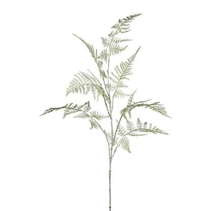 Asparagus_0