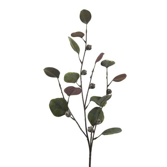 Větvička eukalyptu 6/celofán_0