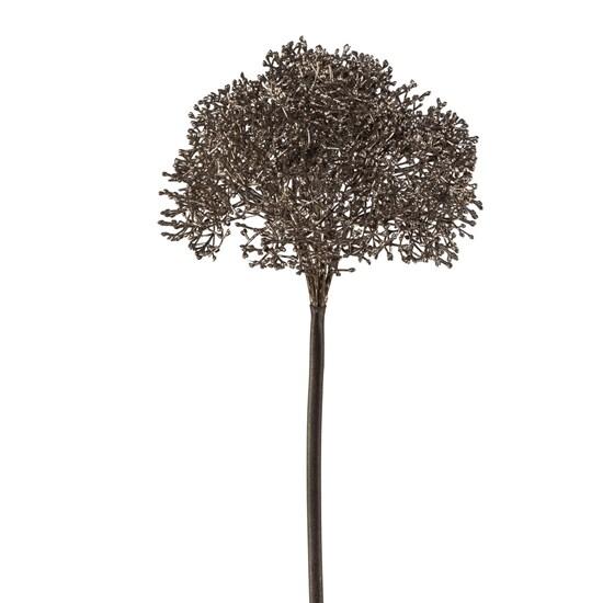 Allium_0