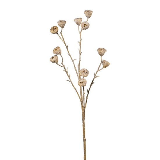 Eukalypthus 62 cm písková_0