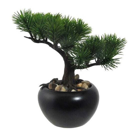Bonsai BOROVICE 19 cm (vč.kvetináče)_0