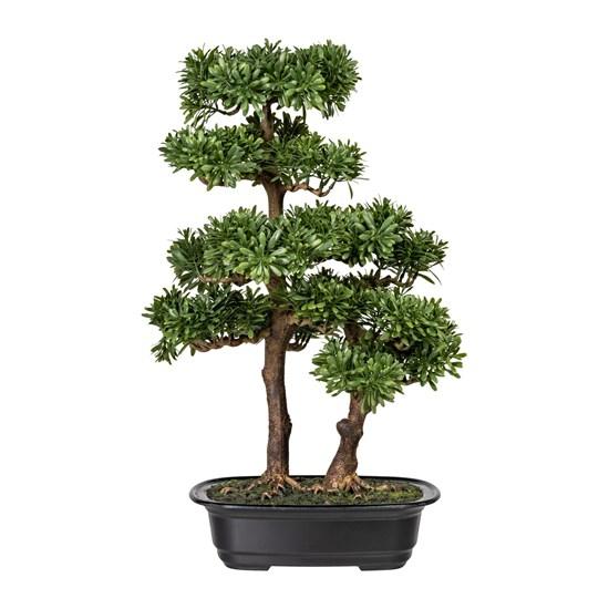 Bonsai Podocarpus 45 cm (vč.květináče)_0