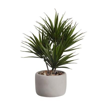 Bonsai PALMA (vč.květináče)_0
