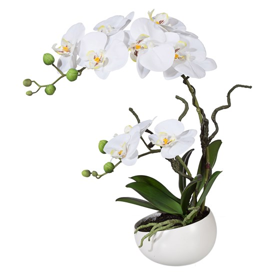 Orchidej Phalenopsis 42cm bílá_0