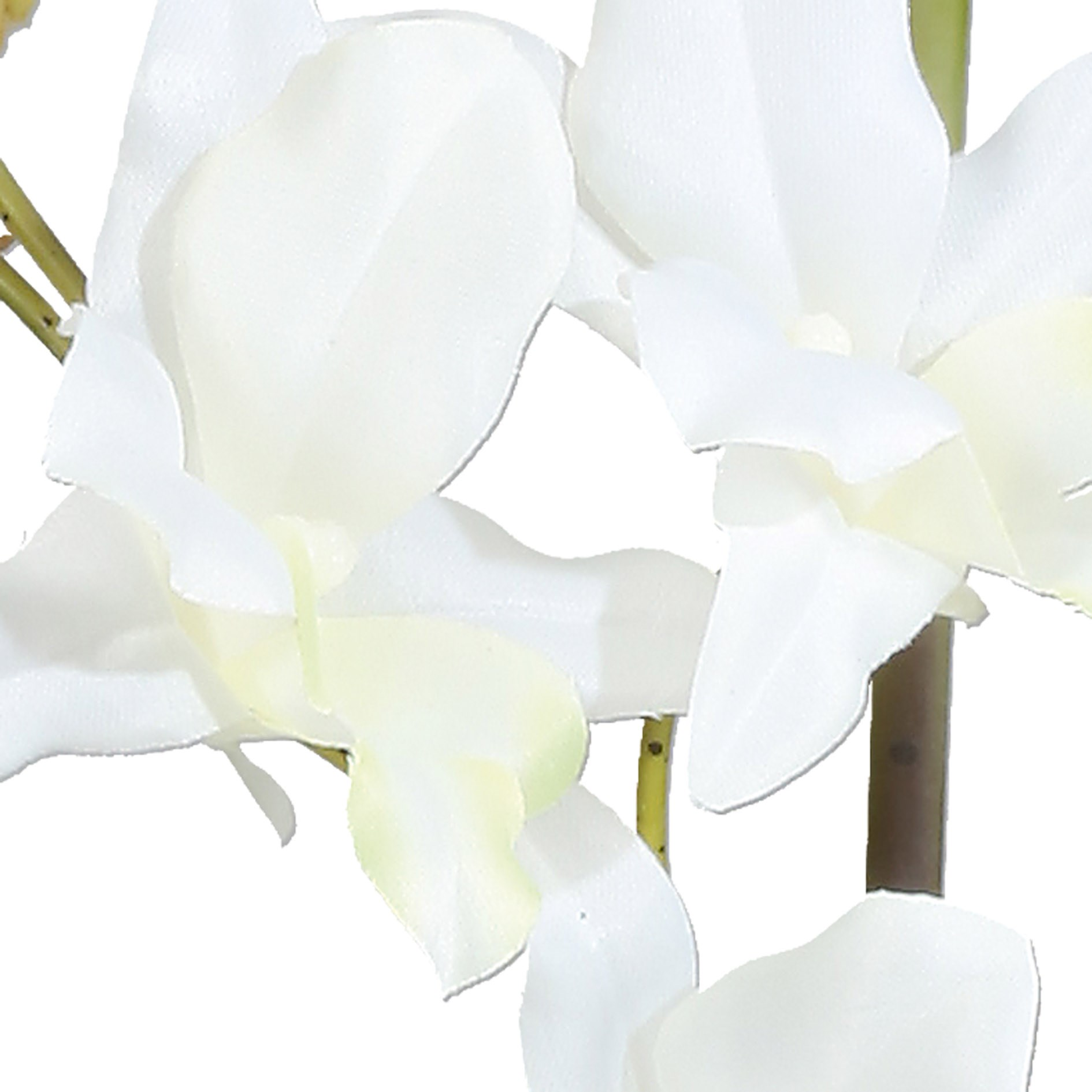 Orchidej Dendrobie 60cm x2 bílá s obalem_0