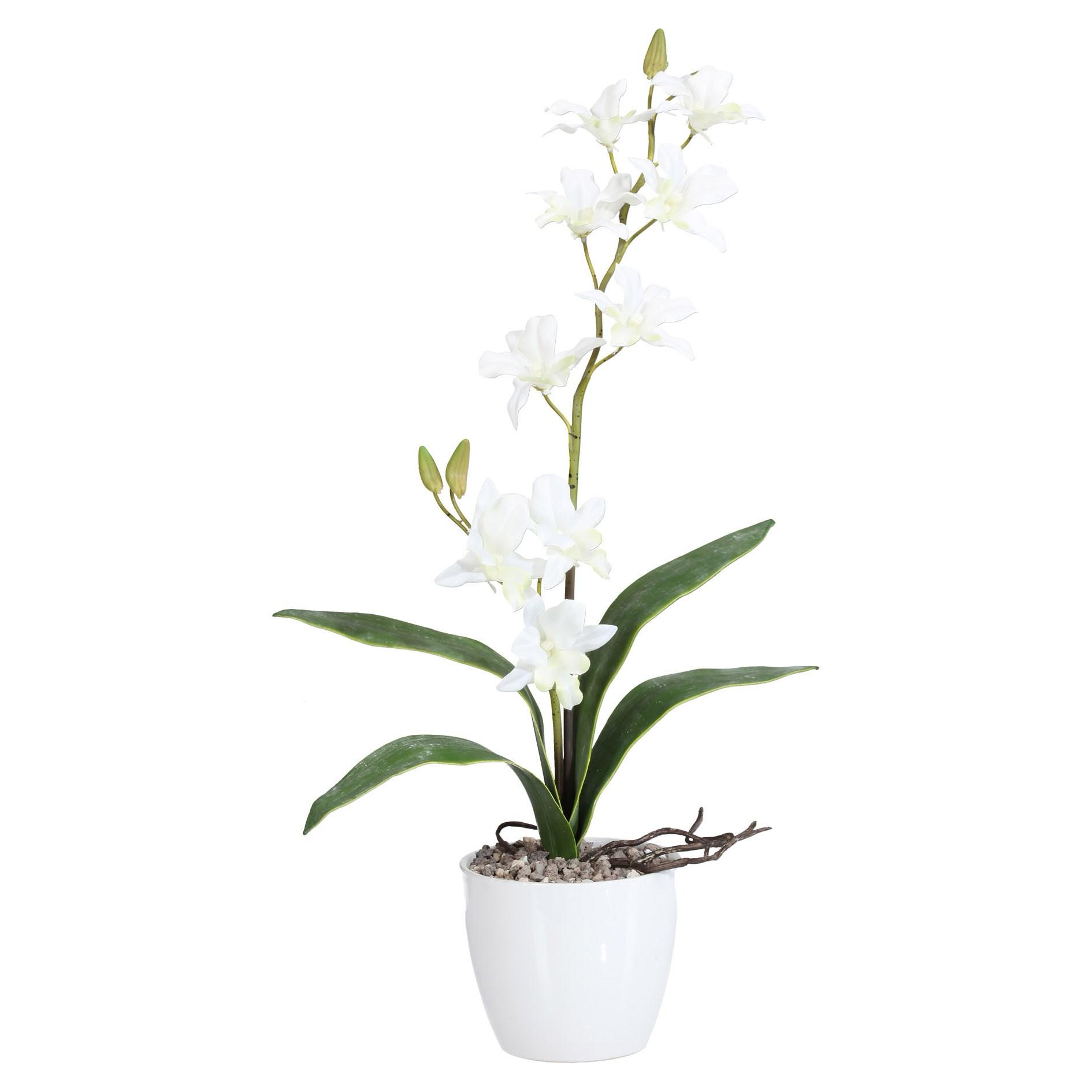 Orchidej Dendrobie 60cm x2 bílá s obalem_1