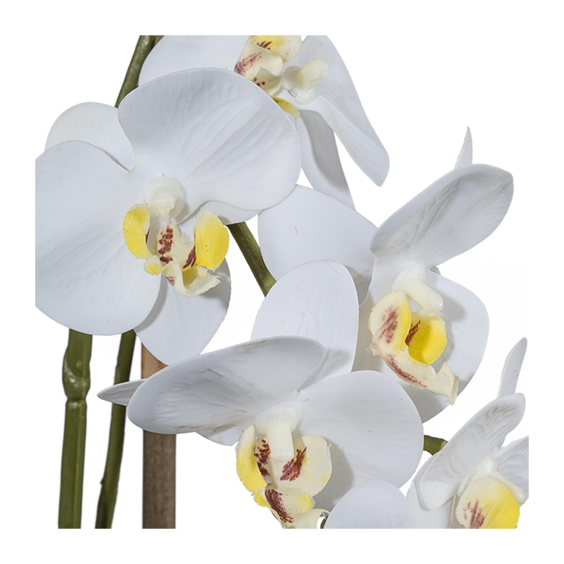 Orchidej Phalenopsis 43cm bílá_0