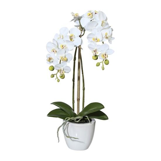Orchidej Phalenopsis 43cm bílá_1