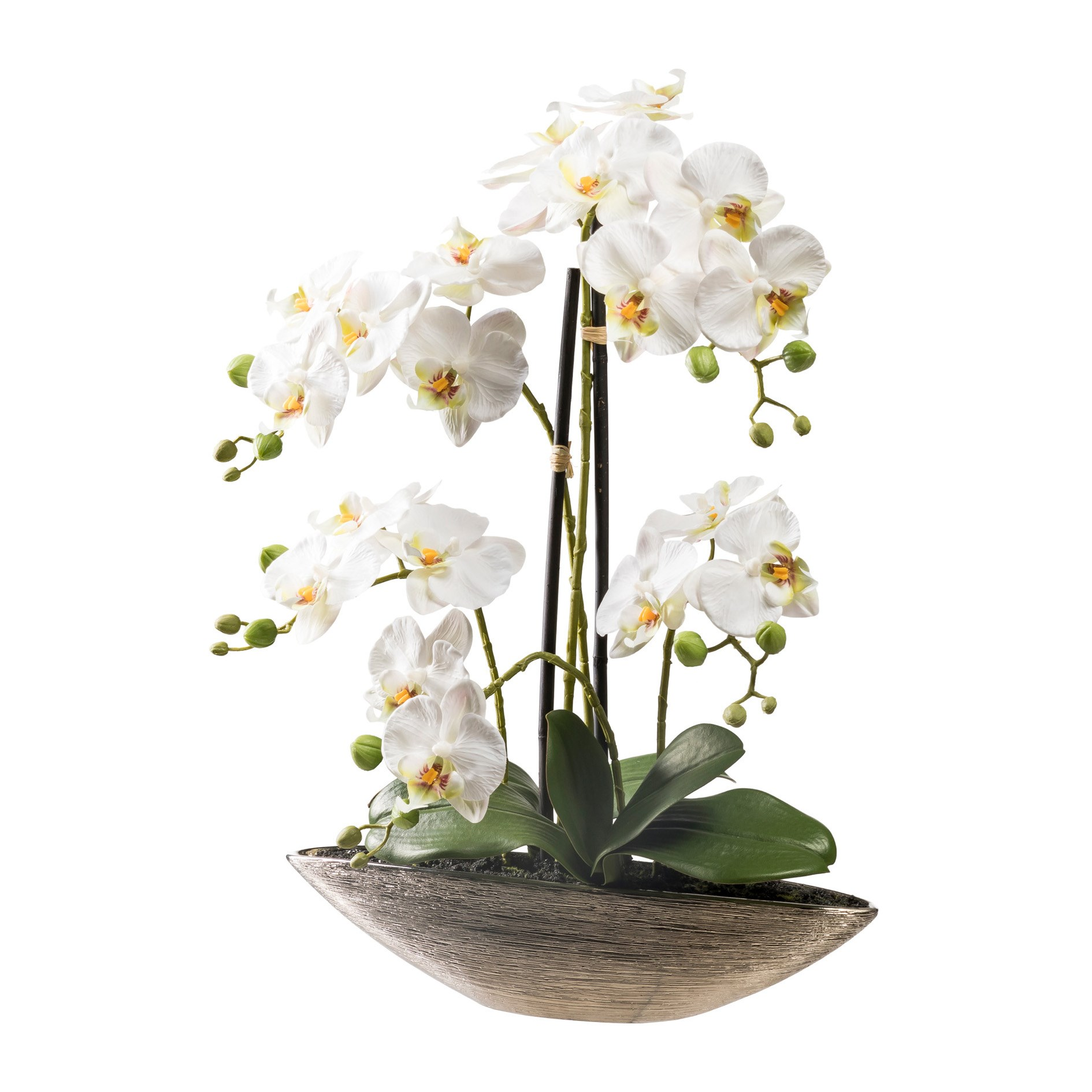 Phalaenopsis 55 cm (vč.keramické mísy)_0