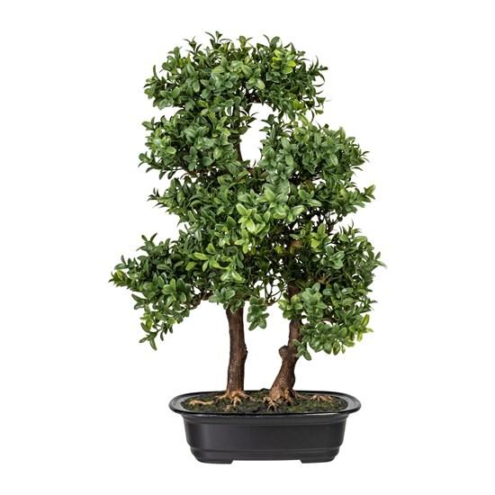 Bonsai Murraya 45 cm (vč.květináče)_0