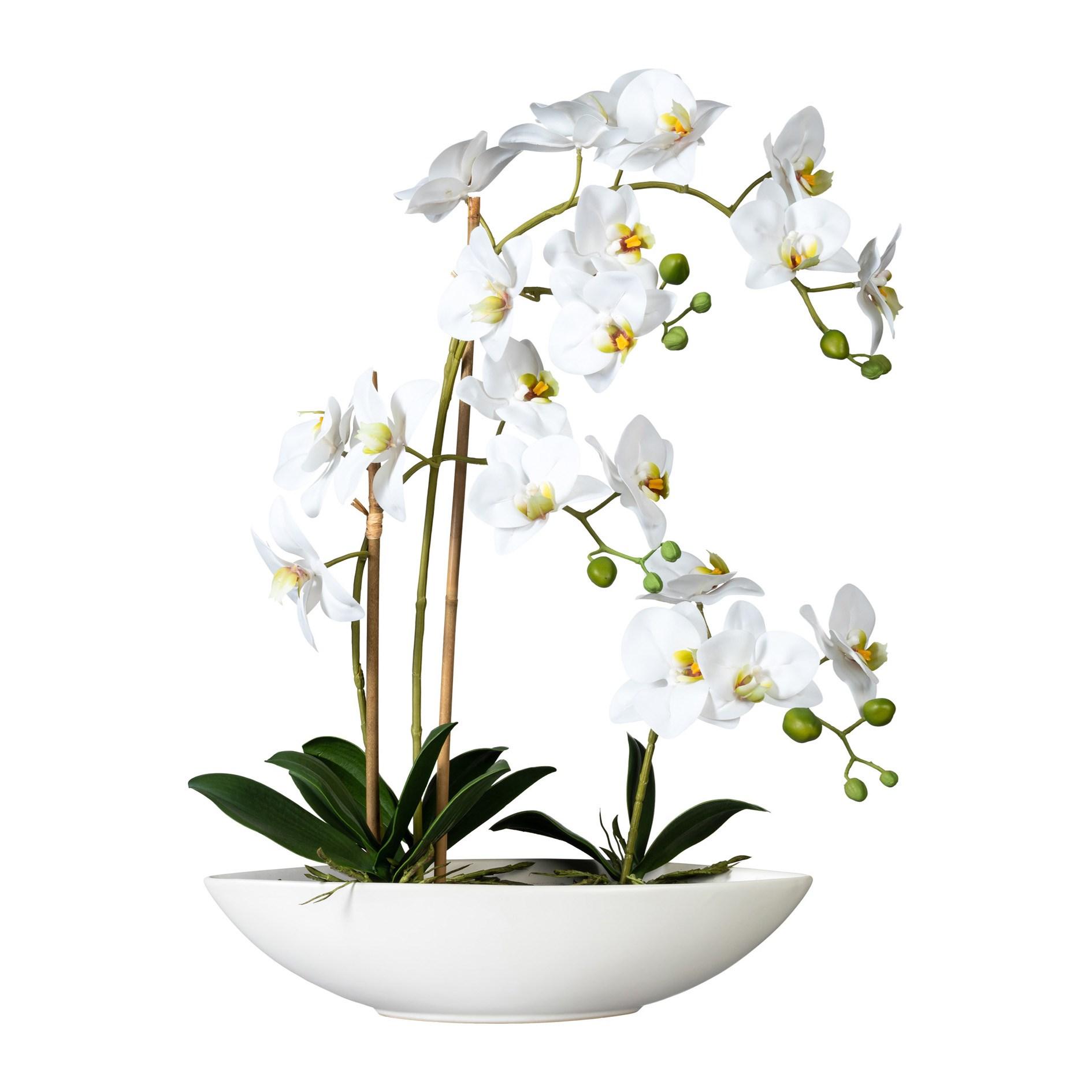 Phalaenopsis x4, ca 60cm weiss,im Keramikschiff 37x11x_0