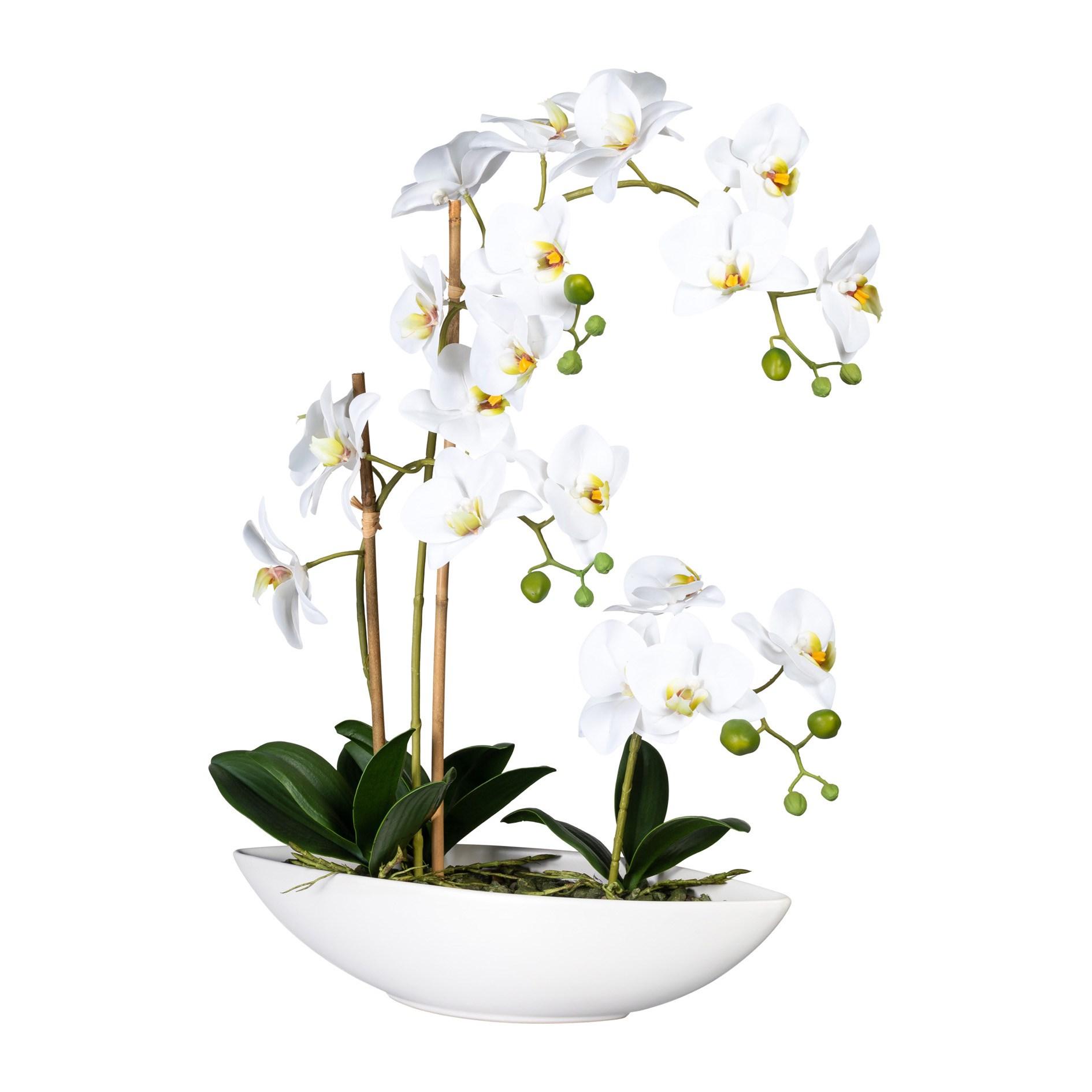 Phalaenopsis x4, ca 60cm weiss,im Keramikschiff 37x11x_1