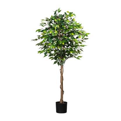 Ficus Benjamin 180cm (plastový obal)_1