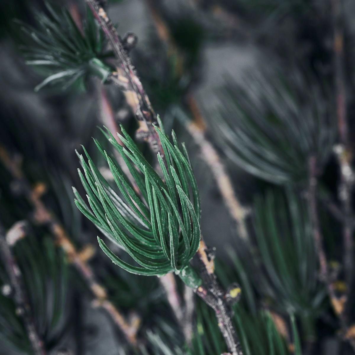 Dekorace větev modřínu LARCH 97 cm přírodní zelená_2