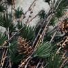 Dekorace větev modřínu se šiškami LARCH 97 cm přír. zelená_2